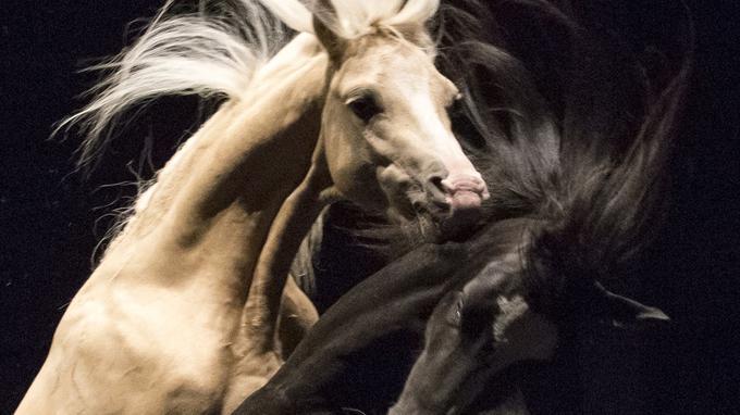 <div>Ex Anima, de Bartabas: les chevaux, ces acteurs de caractère</div>